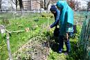 How community gardens offer Toronto neighbourhoods a chance to grow